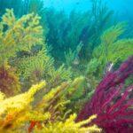 Corso di diving in Sicilia