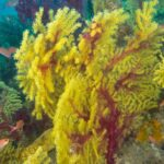 Corso di diving in Sicilia